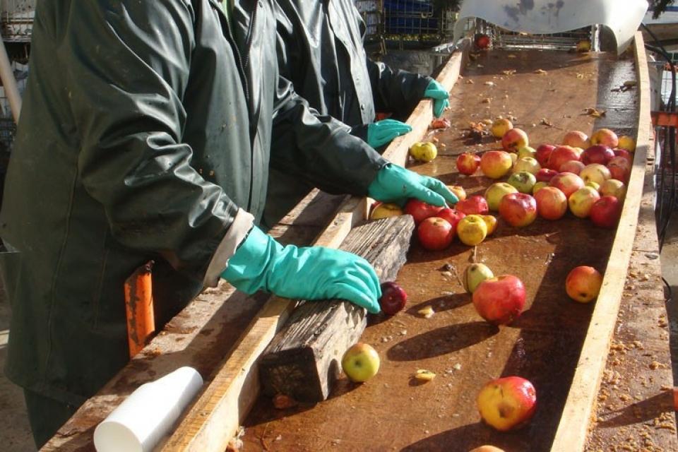 Produits-du-terroir-ESAT-production-de-pomme2