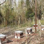 Adopt'ta ruche : un rucher installé à Crécy-la-Chapelle