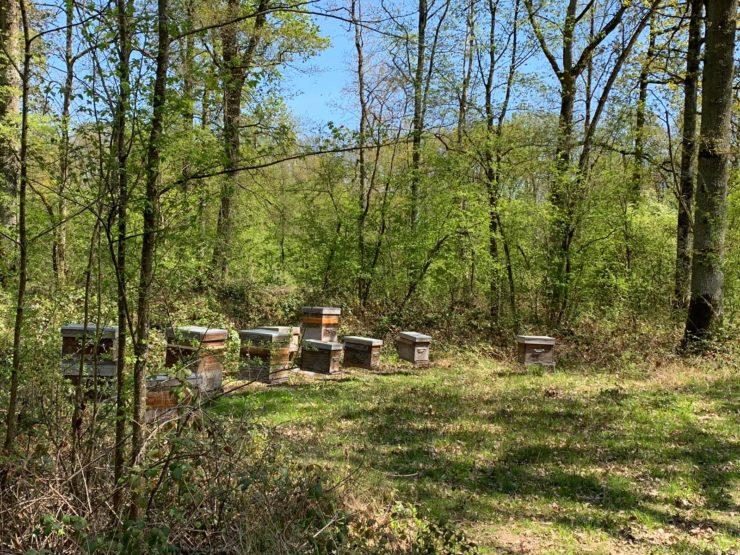 Adopt'ta Ruche ®️: comment adopter une ruche ?
